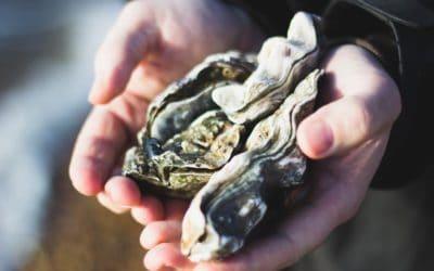 De l'huître, ou les 4 modes de vie